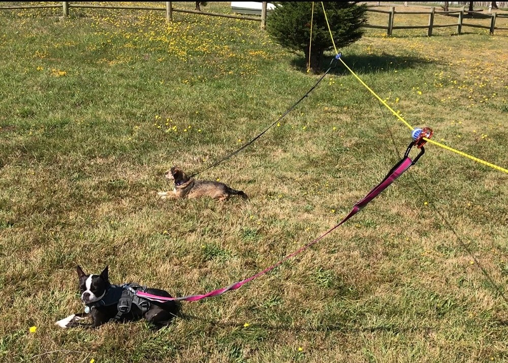 Rover Roamer - Sky Track by Rover Roamer - Aerial Dog Run Trolley System -  PRODUCT PAGE