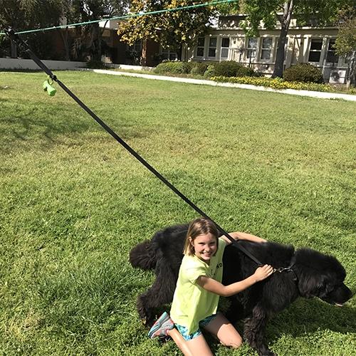 My daughter starting her dog walking business
