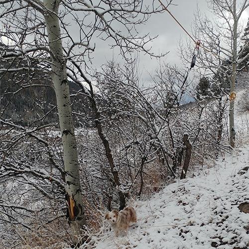 Colorado winter wandering